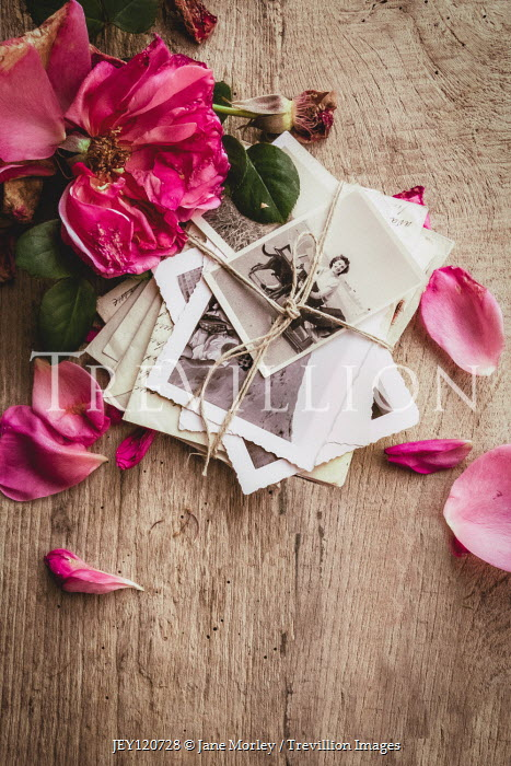Jane Morley PILE OF PHOTOS WITH PINK ROSE Flowers
