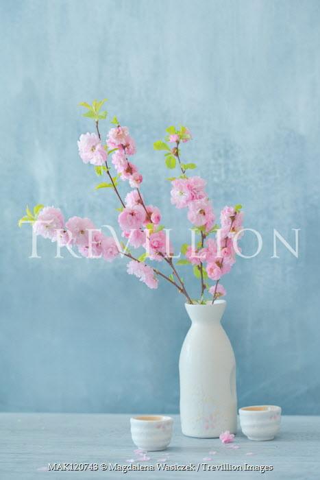 Magdalena Wasiczek pink blossom in vase with sake bowls Flowers