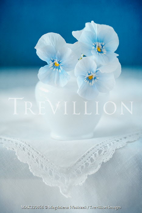 Magdalena Wasiczek three blue pansies in vase on lace tablecloth Flowers