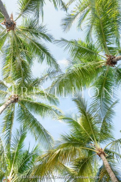 Evelina Kremsdorf Palm trees from below