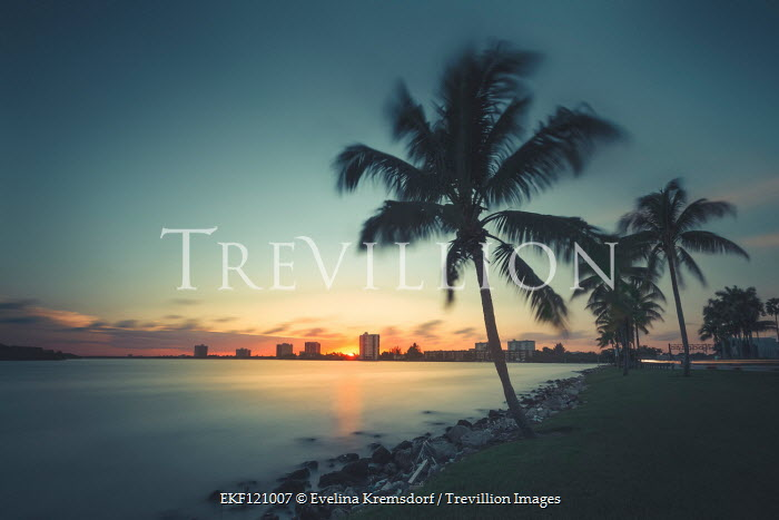 Evelina Kremsdorf Palm trees at sunset in Miami, Florida