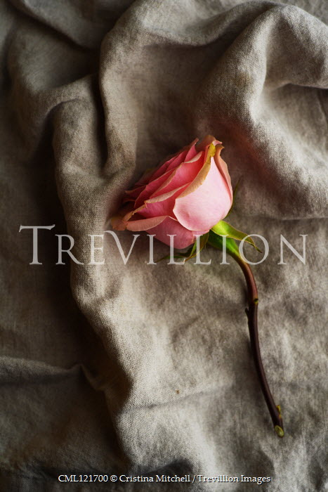 Cristina Mitchell PINK ROSE LYING ON BROWN LINEN Flowers