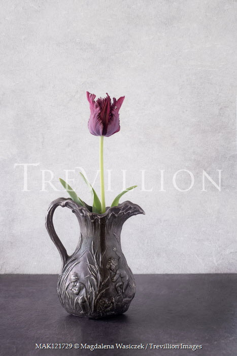 Magdalena Wasiczek PURPLE TULIP IN PEWTER JUG Flowers