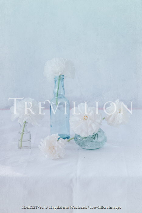 Magdalena Wasiczek WHITE FLOWERS IN GLASS BOTTLES ON TABLE Flowers