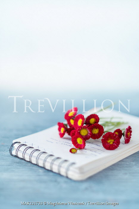 Magdalena Wasiczek RED AND YELLOW FLOWERS LYING ON NOTEPAD Flowers