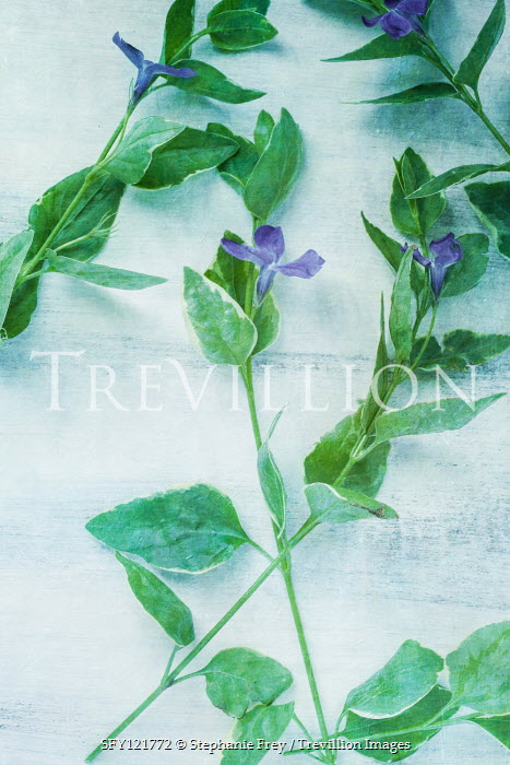 Stephanie Frey BLUE FLOWERS AND LEAVES FROM ABOVE Flowers