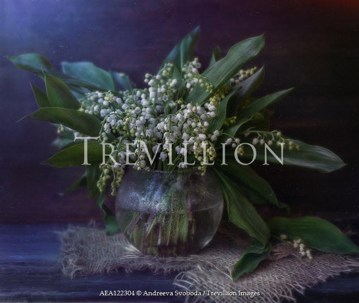 Andreeva Svoboda Lily of the valley in vase