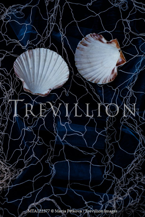 Maria Petkova Scallop shells in net