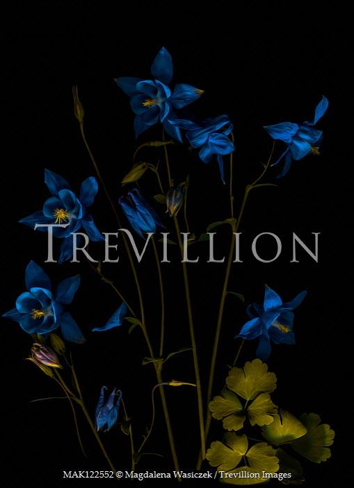 Magdalena Wasiczek BLUE FLOWERS AND LEAVES IN SHADOW Flowers