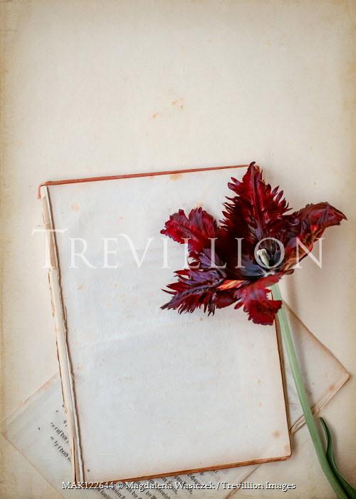Magdalena Wasiczek RED TULIP ON BROKEN BOOK Flowers