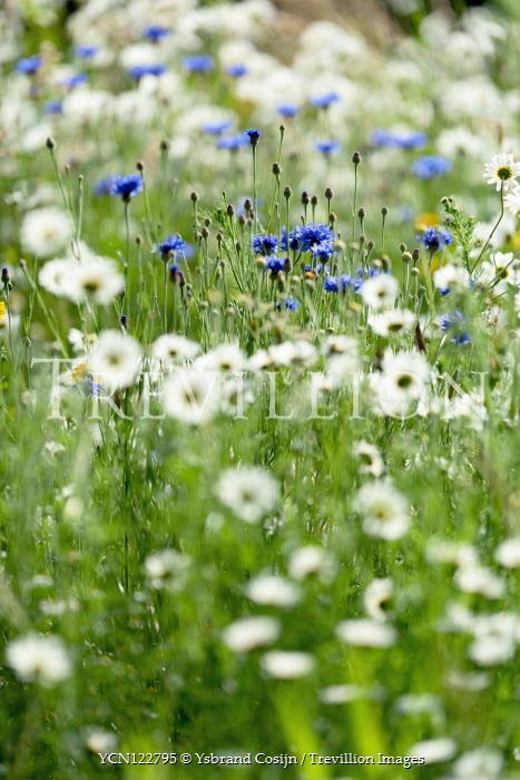 Ysbrand Cosijn Flowers in meadow