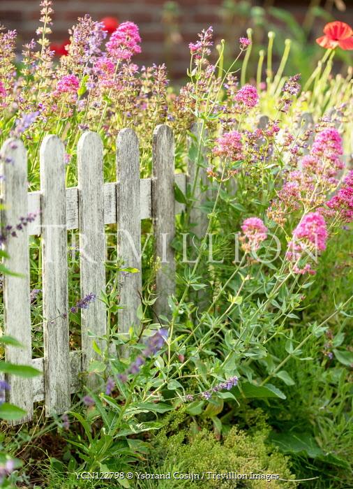 Ysbrand Cosijn Wild flowers with wooden fence in meadow