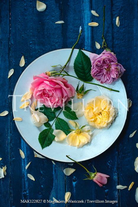 Magdalena Wasiczek Roses and petals on plate