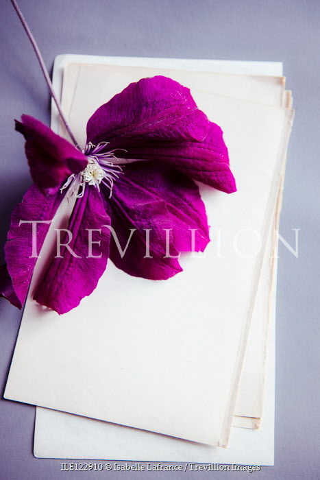 Isabelle Lafrance PURPLE FLOWER ON BLANK PAPER Flowers