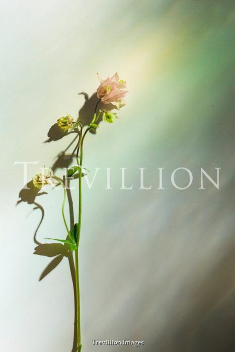 Shelley Richmond PINK FLOWER BY WHITE WALL IN SUNLIGHT Flowers