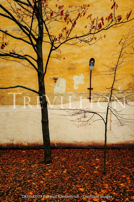Daniil Kontorovich AUTUMN TREES BY YELLOW BUILDING WITH LAMP Trees/Forest