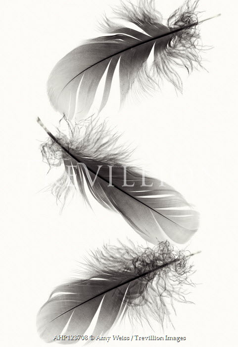 Amy Weiss THREE FEATHERS FROM ABOVE Miscellaneous Objects