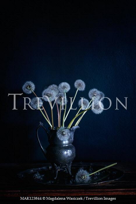 Magdalena Wasiczek DANDELIONS IN METAL JUG Flowers