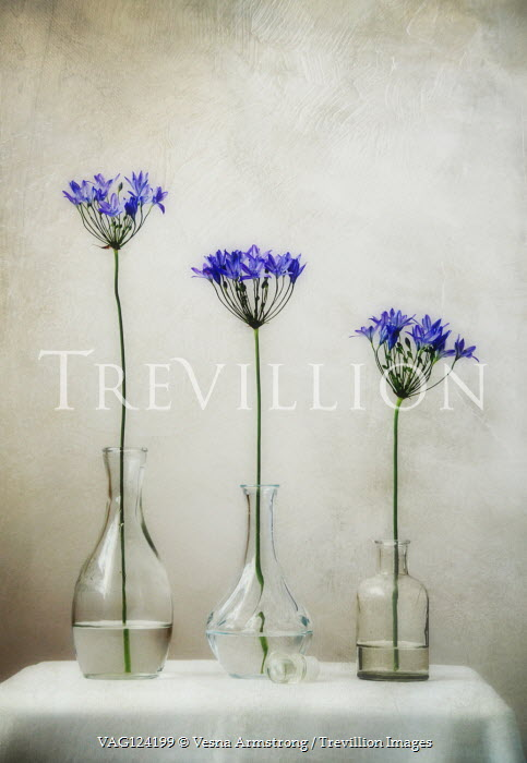 Vesna Armstrong Purple flowers in vase