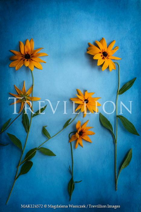 Magdalena Wasiczek Orange flowers on blue background