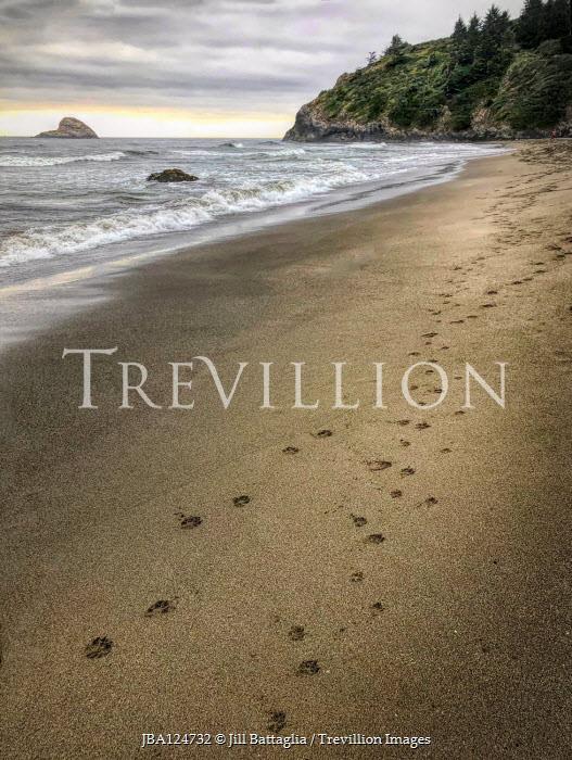 Jill Battaglia Dog pawprints on beach
