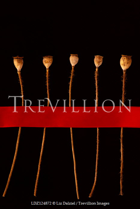 Liz Dalziel Seed pods under red ribbon