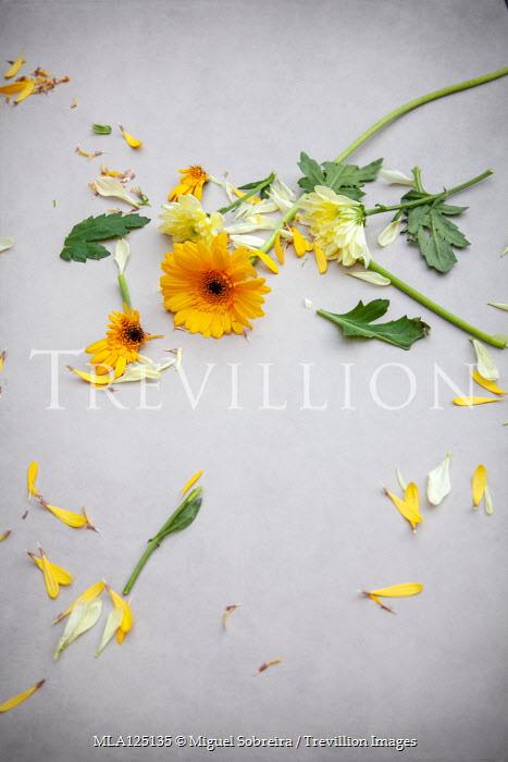 Miguel Sobreira BROKEN YELLOW FLOWERS SCATTERED ON FLOOR Flowers