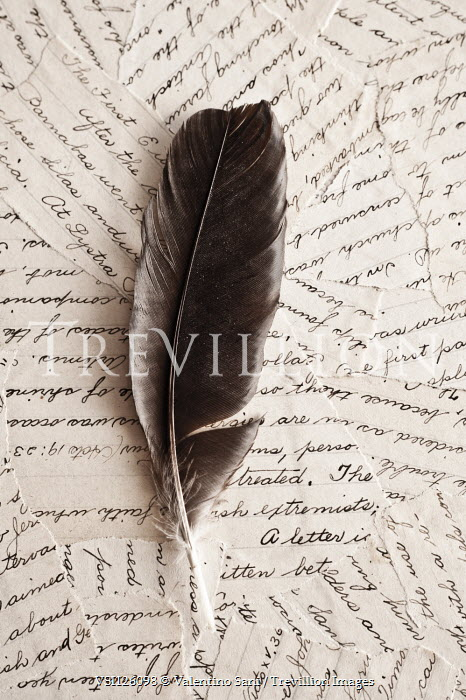 Valentino Sani FEATHER ON FRAGMENTS OF LETTER Miscellaneous Objects