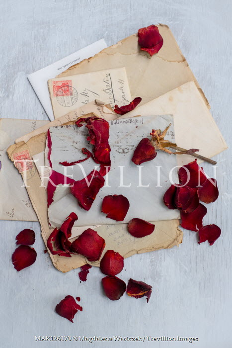Magdalena Wasiczek RED ROSE AND PETALS ON OLD LETTERS Flowers