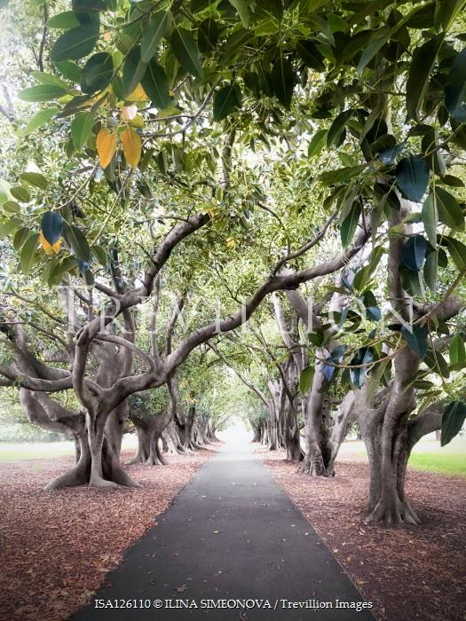 ILINA SIMEONOVA EMPTY PATHWAY WITH AVENUE OF TREES Trees/Forest