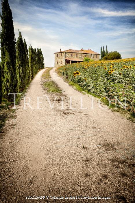Yolande de Kort ITALIAN VILLA WITH SUNFLOWERS AND CYPRESS TREES Houses