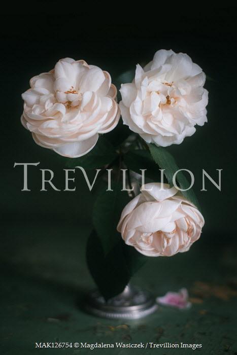 Magdalena Wasiczek THREE WHITE ROSES IN VASE Flowers