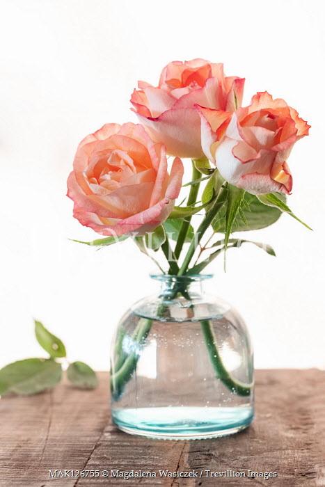 Magdalena Wasiczek THREE ORANGE ROSES IN GLASS VASE Flowers