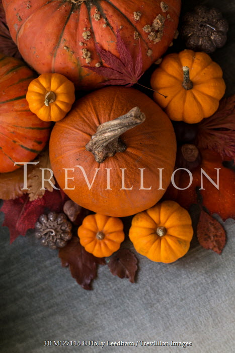 Holly Leedham Variety of pumpkins