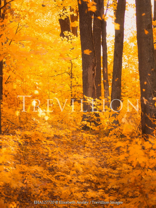 Elisabeth Ansley Forest in autumn