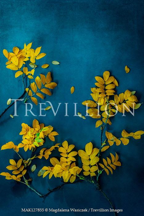 Magdalena Wasiczek Yellow leaves on blue background