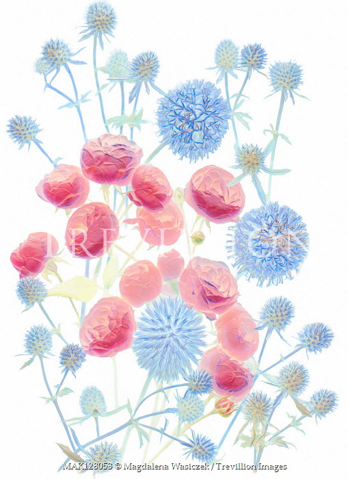 Magdalena Wasiczek BLUE THISTLES AND RED FLOWERS Flowers