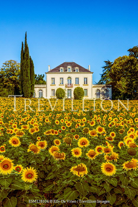 Elly De Vries MANSION WITH FIELD OF SUNFLOWERS Houses