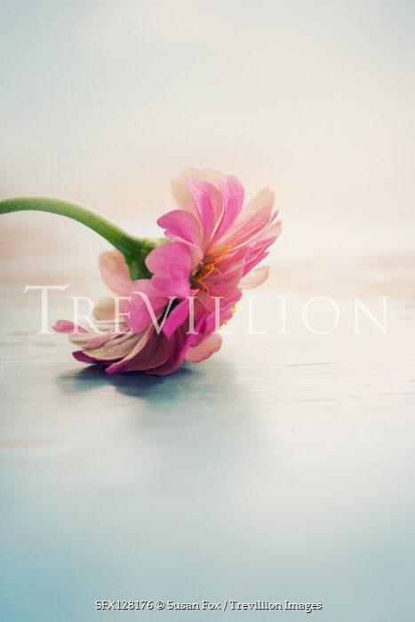 Susan Fox PINK FLOWER ON TABLE Flowers