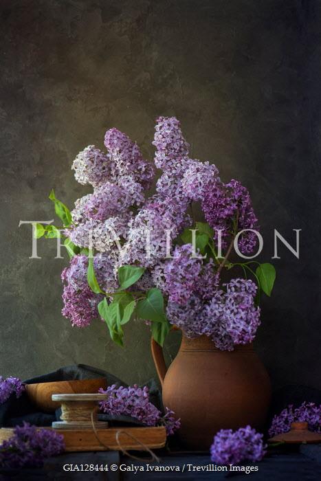 Galya Ivanova Wisteria flowers in vase