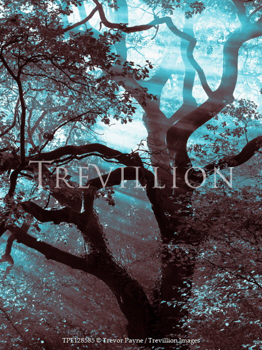Trevor Payne TREE AND BRANCHES WITH LEAVES IN SUNLIGHT Trees/Forest