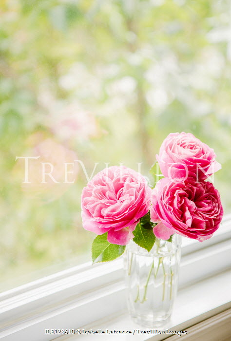 Isabelle Lafrance PINK ROSES IN VASE ON WINDOW SILL Flowers