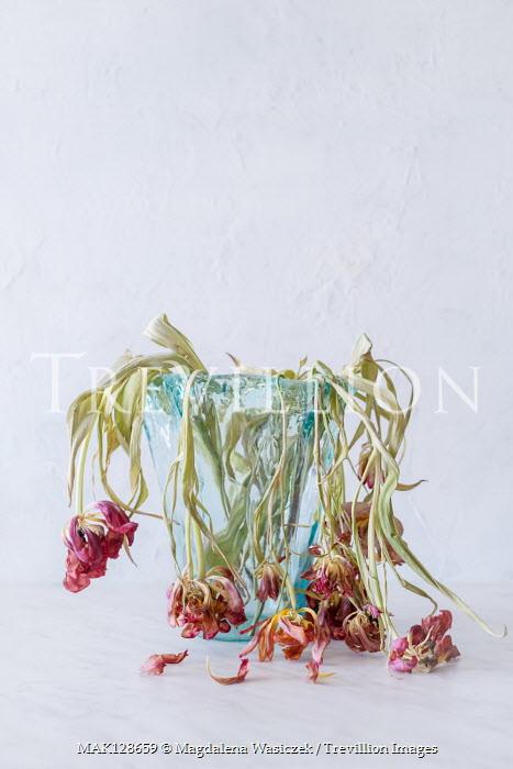 Magdalena Wasiczek DEAD PINK FLOWERS IN GLASS VASE Flowers
