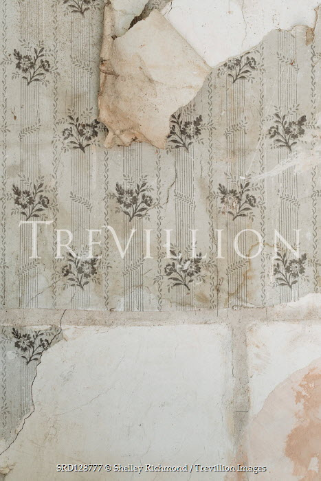 Shelley Richmond PEELING FLORAL WALLPAPER Interiors/Rooms
