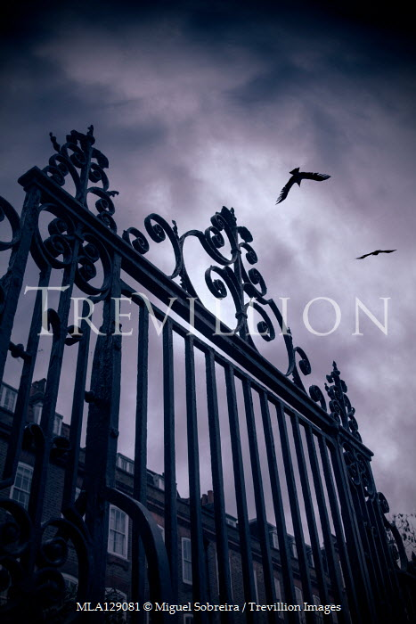 Miguel Sobreira Birds flying over wrought iron gate from below