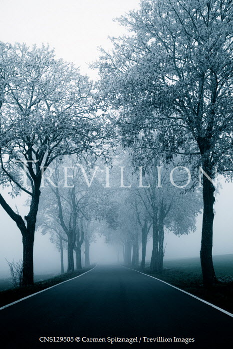 Carmen Spitznagel EMPTY COUNTRY ROAD WITH TREES IN MIST Paths/Tracks