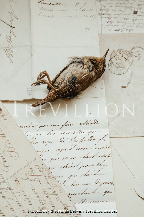 Matilda Delves SMALL DEAD BROWN BIRD LYING ON LETTERS Birds