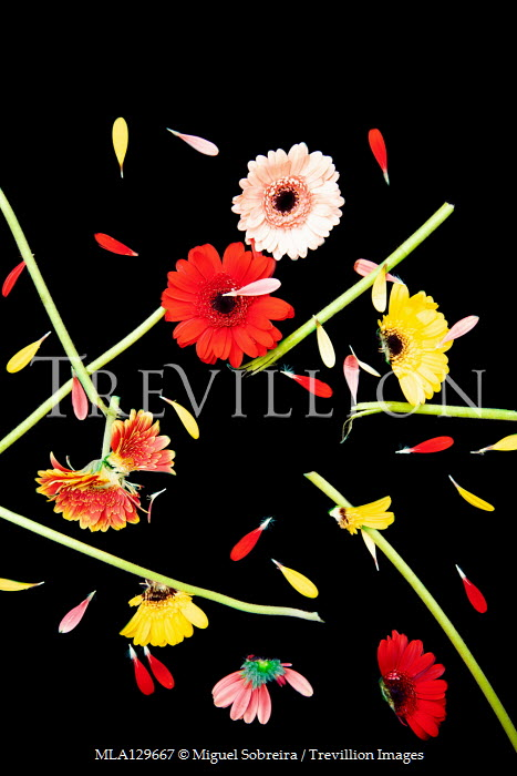 Miguel Sobreira FLOWERS AND PETALS WITH BROKEN STEMS Flowers