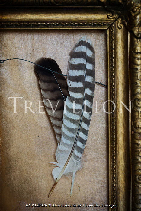 Alison Archinuk TWO PATTERNED FEATHERS IN GOLD FRAME Miscellaneous Objects