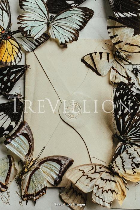 Matilda Delves Dead butterflies on envelope